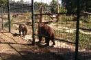 Jászberény Állatkert_5