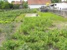 Műveljük kertjeinket!